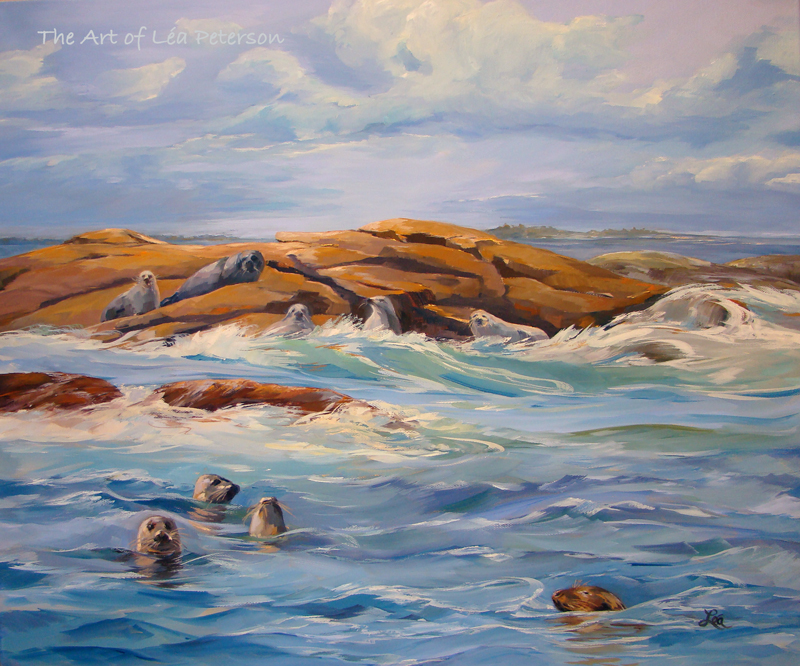 Harbor Seals (1)